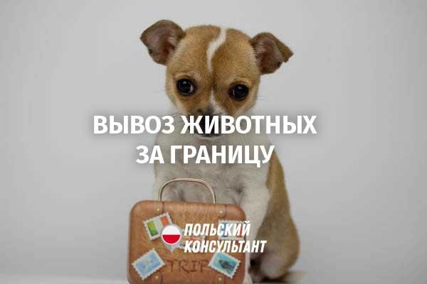 документы для вывоза собаки за границу