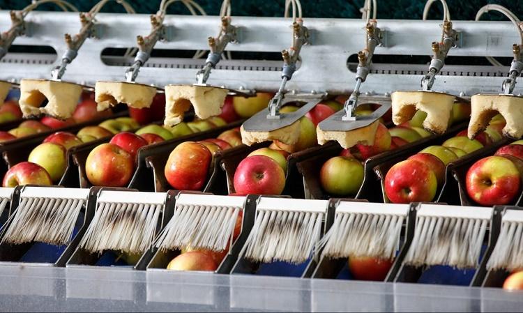 На фото робот по обработке урожая яблок